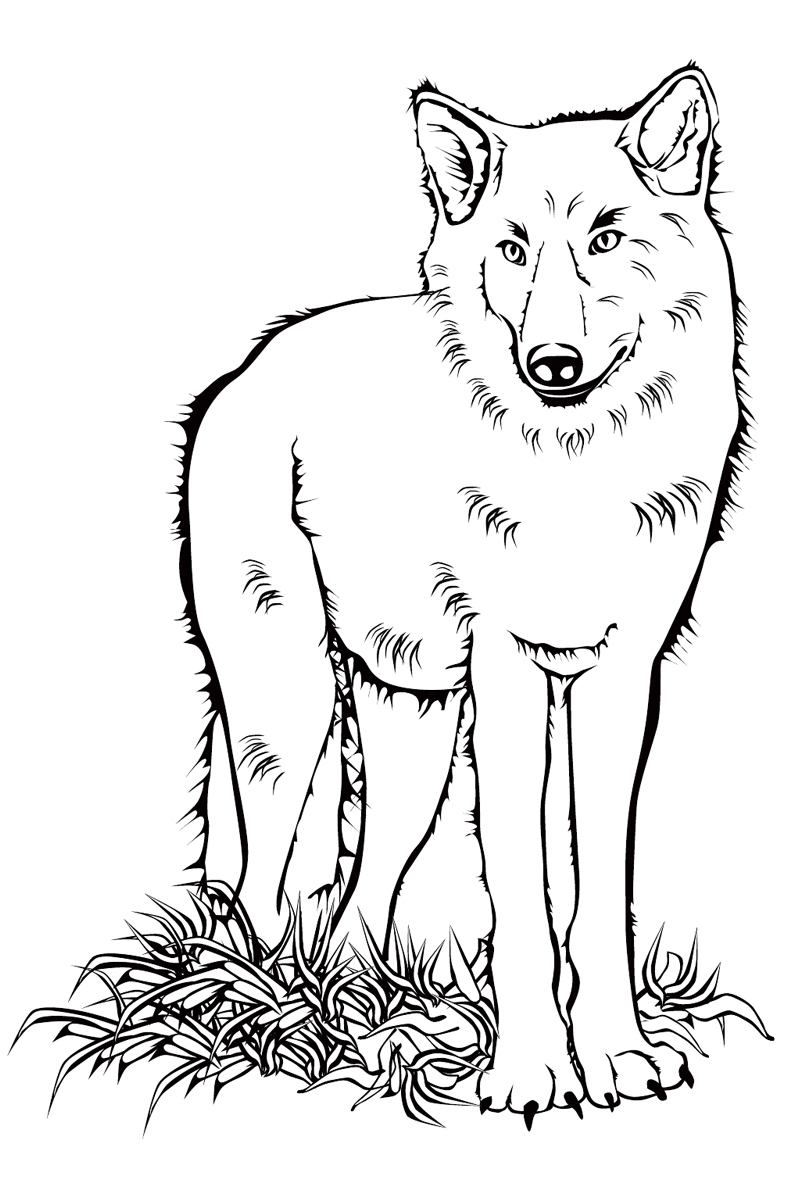 Раскраска волк, скачать и распечатать бесплатно