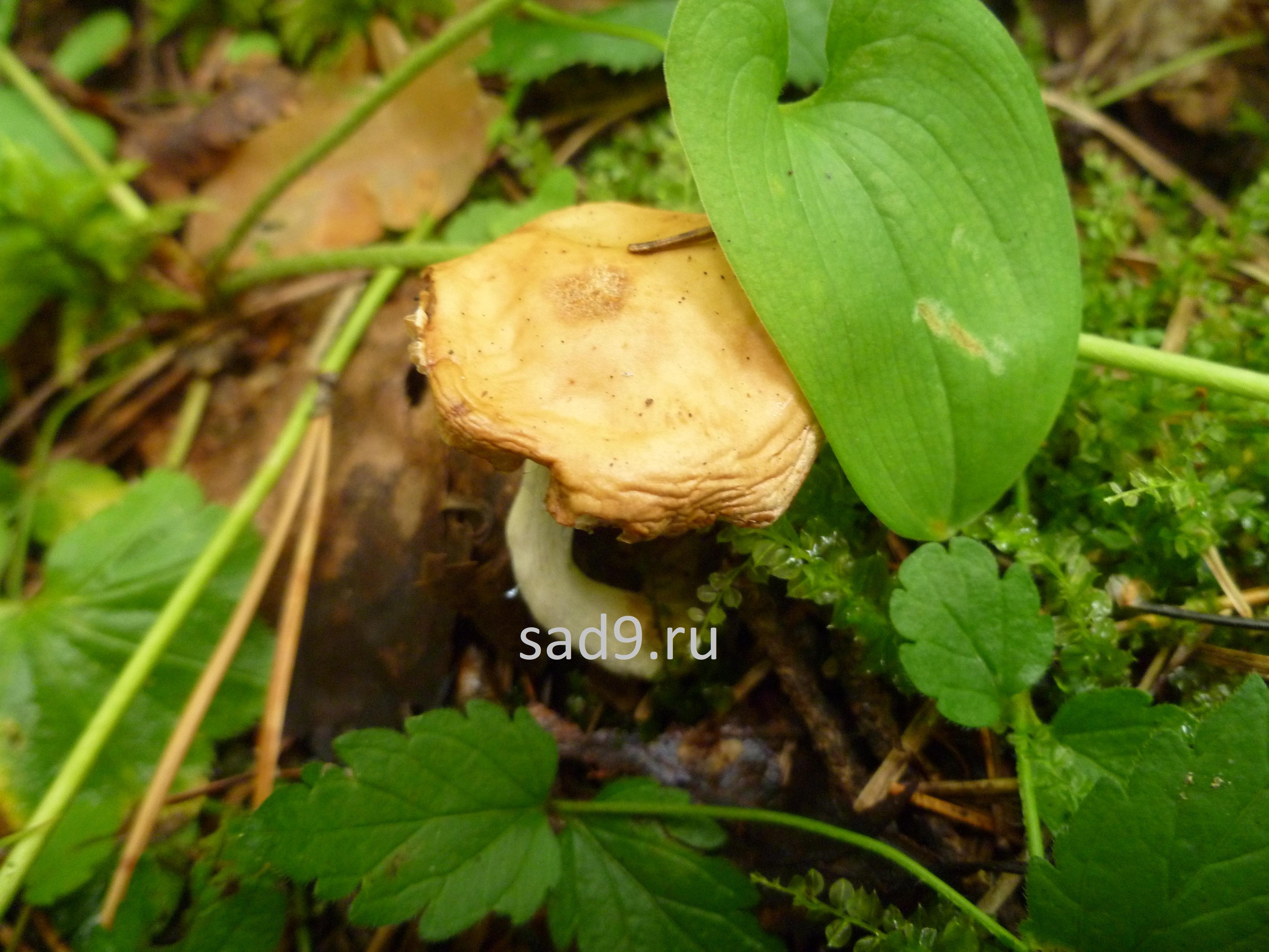 Лесные картинки с грибами