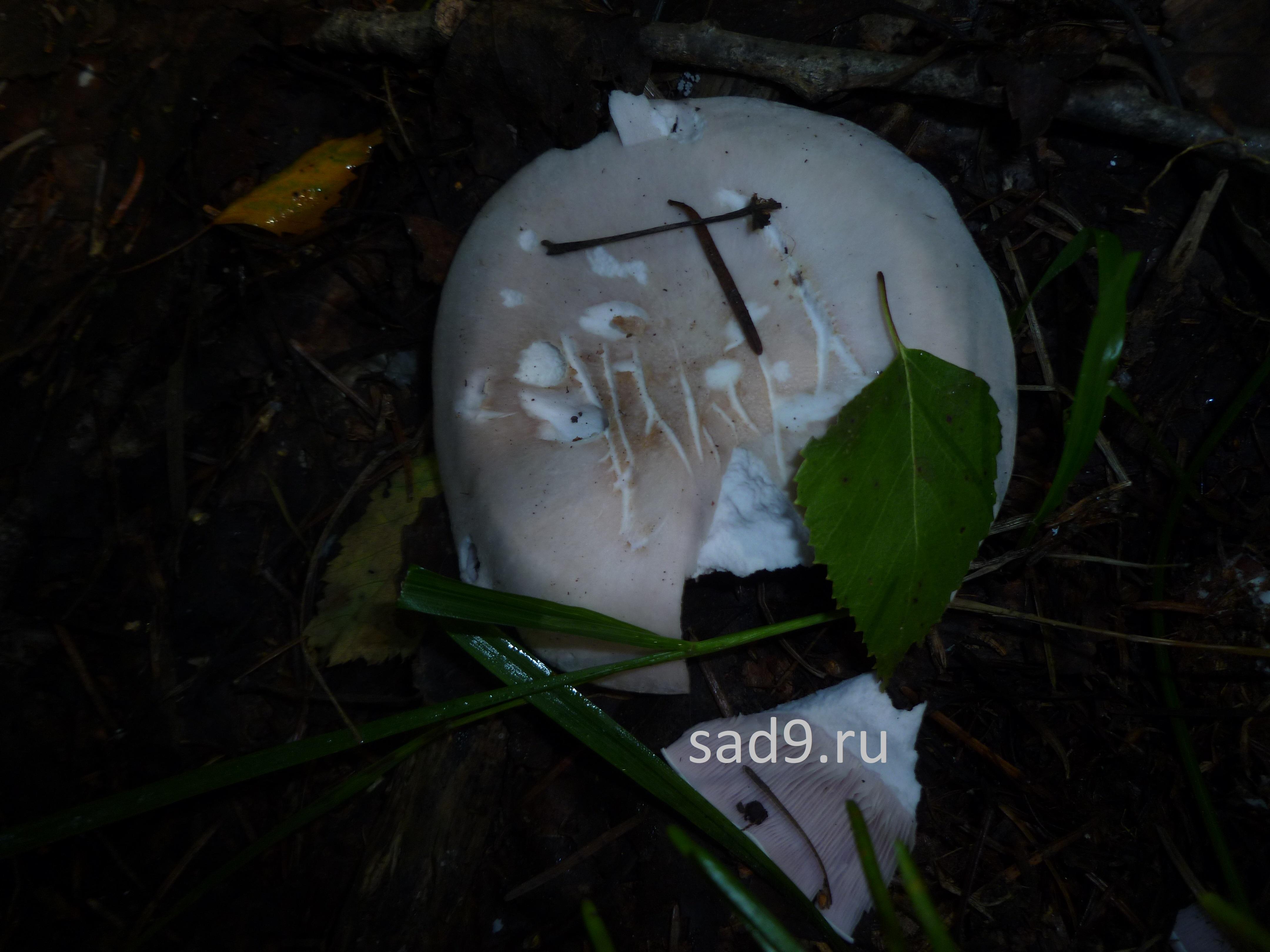 Картинки про грибы в лесу
