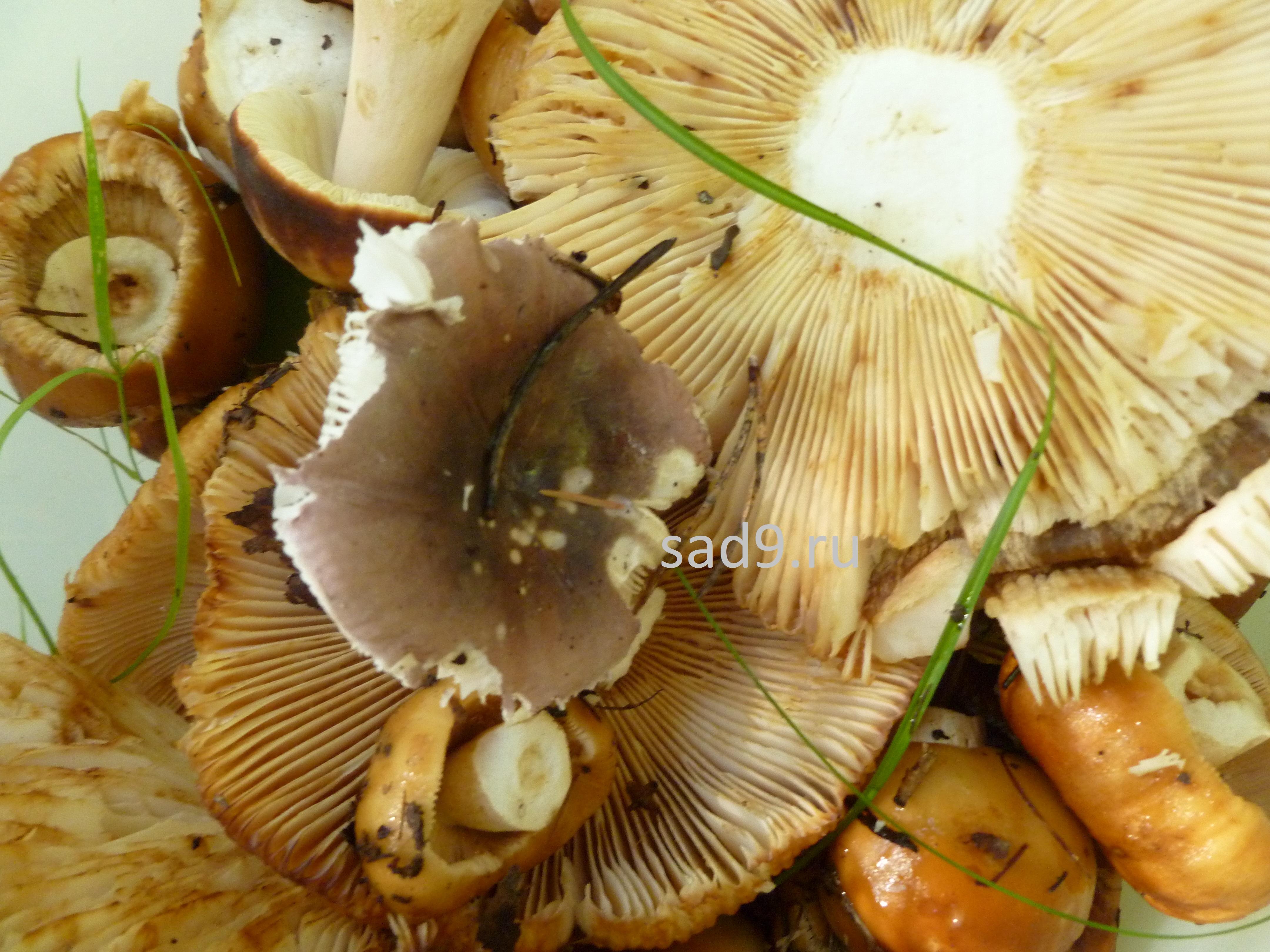 Собранные грибы картинки