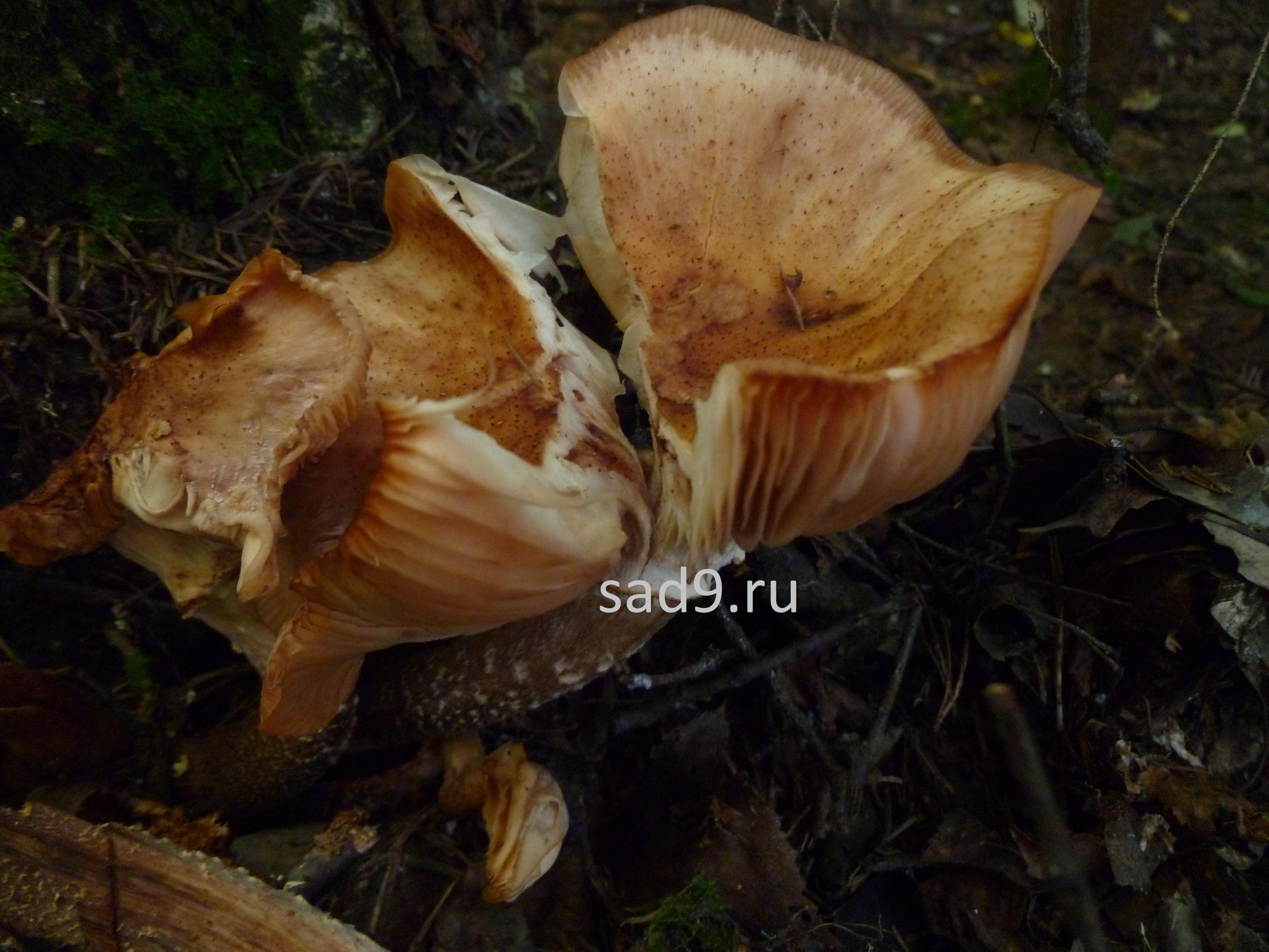 Интересные фото грибов в лесу