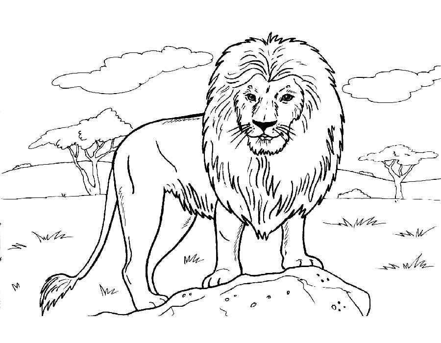 Раскраска лев распечатать