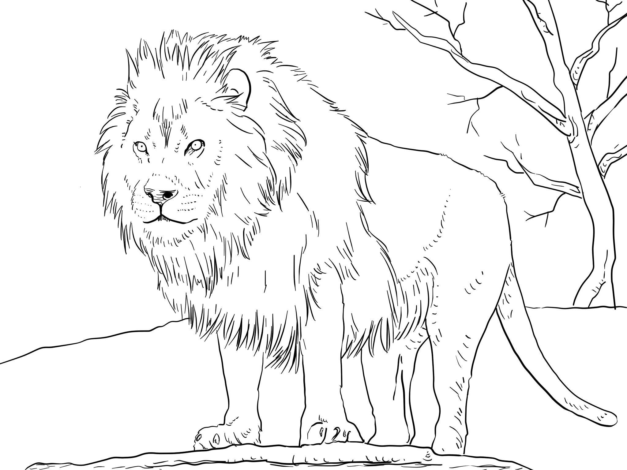 Детские раскраски про льва, распечатать