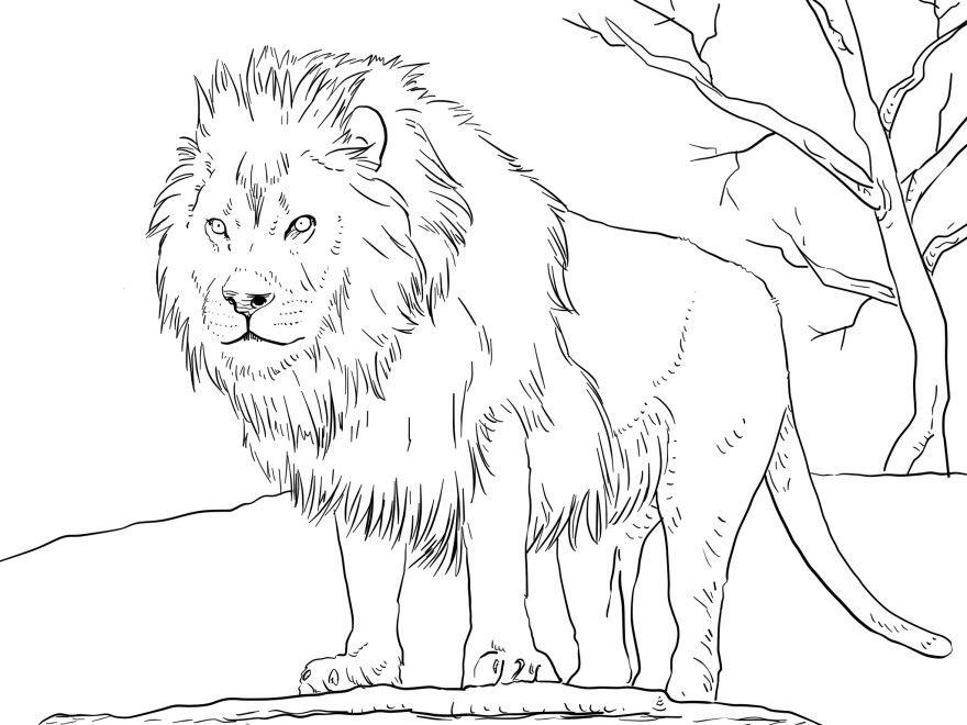 Лев раскраски король грузовичок распечатать бесплатно симба