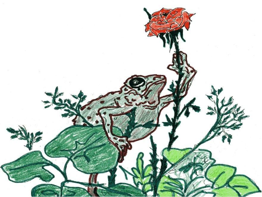 Читать сказка О жабе и розе Гаршин текст