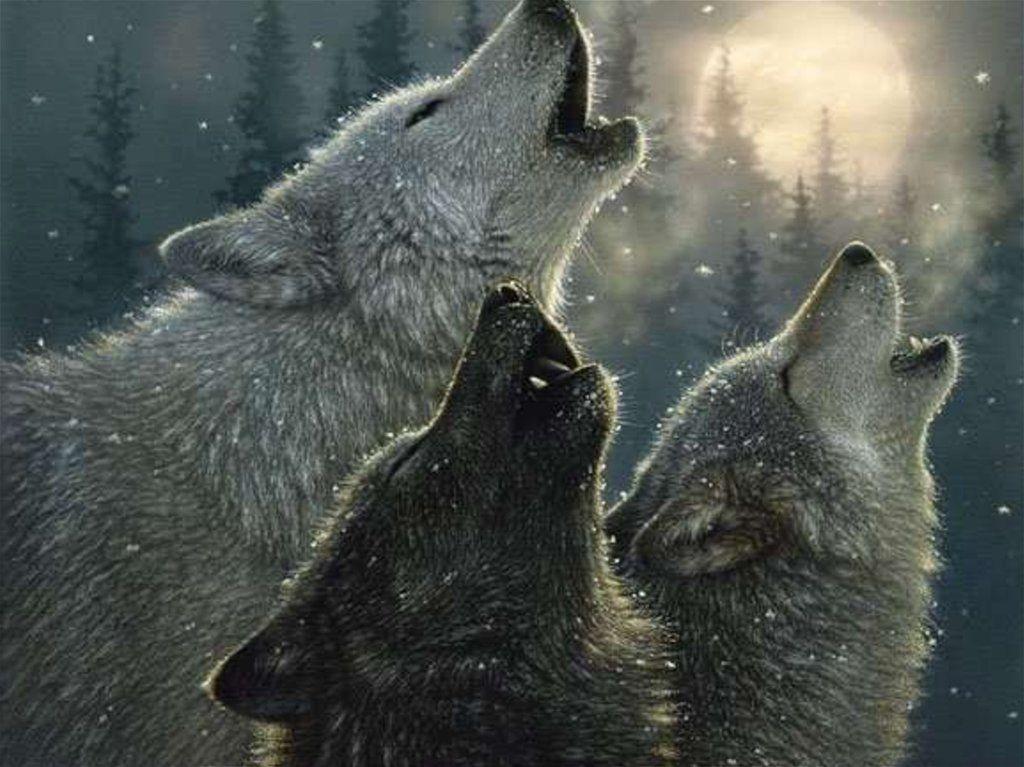 Читать рассказ Волки Бунин бесплатно онлайн