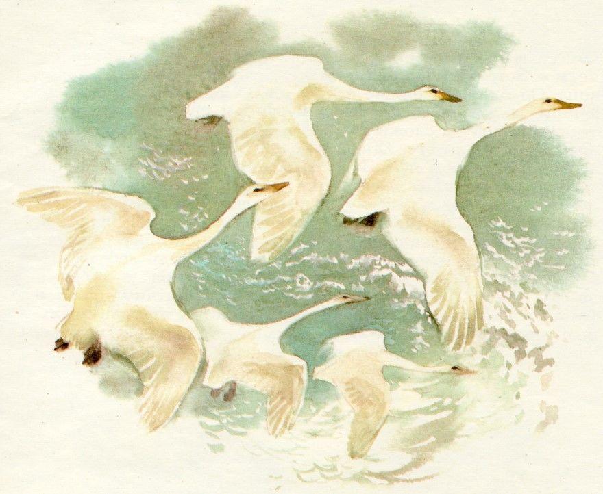 Читать рассказ Лебеди Толстой бесплатно онлайн скачать