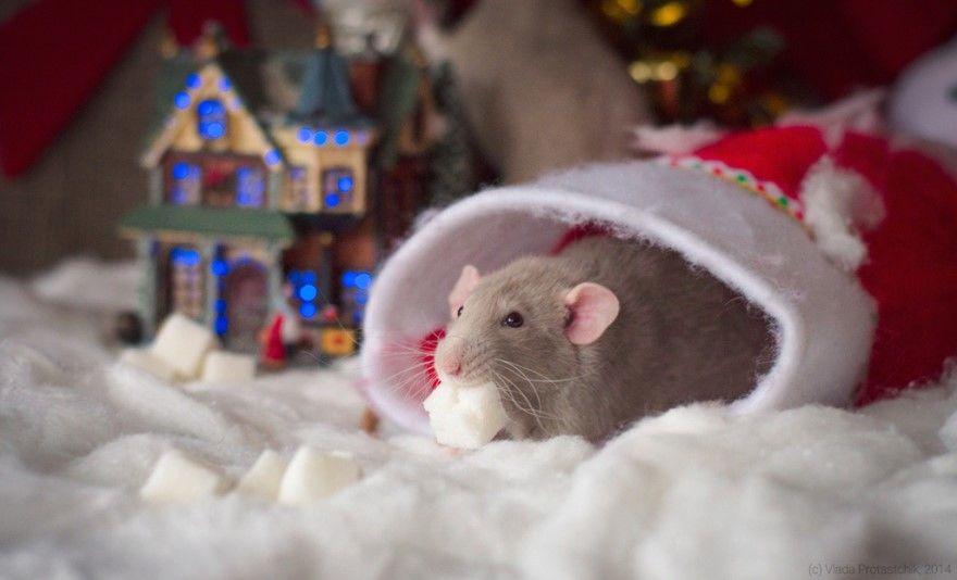 Стихи про мышей Новый год детские короткие